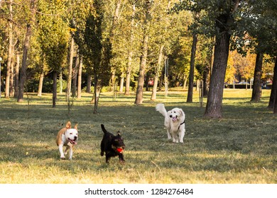 Group of happy dogs playing in the park