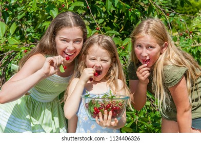 Group of happy kids picking and eating cherry