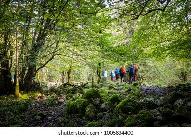 A group of hiker walking in jungle, Amol& Iran.