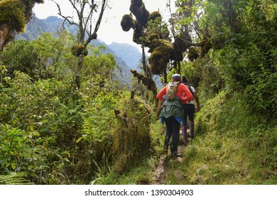 A group of hikers in the dense rainforest of Rwenzori Mountains, Rwenzori Mountains National Park, Kasese District, Uganda