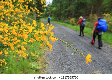 group of hikers inthe forest