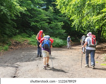 group of hikers lwalking in the forest