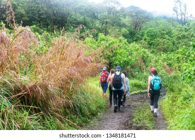 Group of hikers in a tropical trail