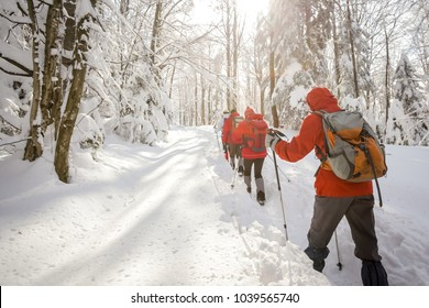 Group of hikers walking in the forest on the hill covered with fresh deep snow.