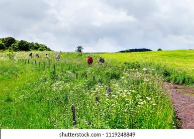 group of hikers walking in meadow of flowers