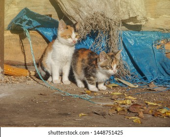 Group homeless cats. Cute adorable kittens. Homeless  cats need  a new home.  Many stray cats. Baby stray cats