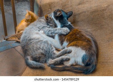 Group homeless cats. Friendly cats on the street. Homeless cats need a new home. Many stray cats.