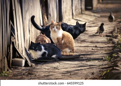 A group of homeless cats on the city street hunts pigeons. A red cat looks smart .