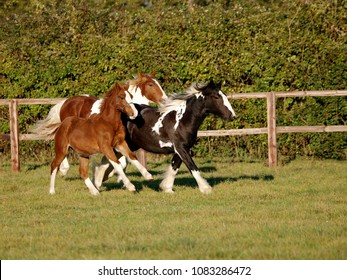 A group of horses canter loose through a paddock.