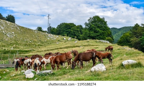 group of horses graze on the mountain