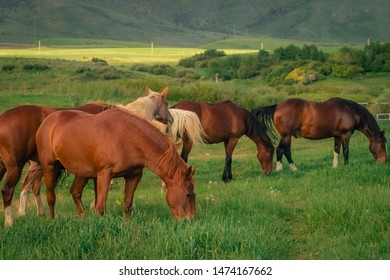 A group of horses grazing in a green grassy meadow, with a background of farm fields and mountains.