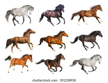Group of the horses isolate on the white background