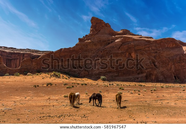 A group of horses in Monument Valley tribal park in springtime