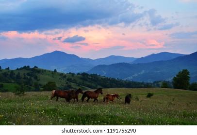 group of horses running wild