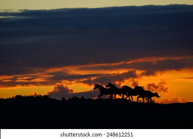 Group of Horses silhouettes running under dramatic sunset