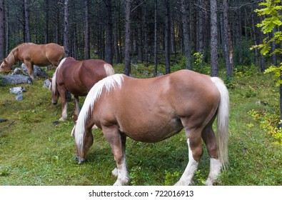 Group of horses within Aiguestortes National Park, Vall de Boi, Lleida, Catalonia, Spain