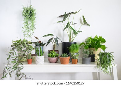 Group of houseplant  on table in room. Lifestyle home decoration