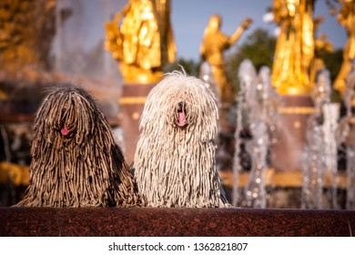 group of Hungarian puli dog with dreadlock outdoor in summer