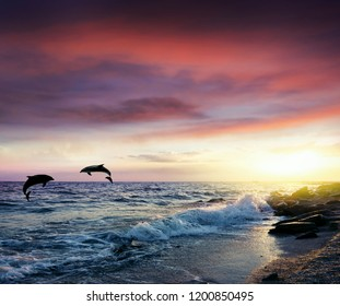 Group of jumping dolphins at sunset . Dolphins jumping .   Serenity nature background .