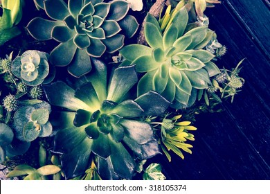 A group of Kalanchoe and succulent plants in the garden tray in the vintage style picture