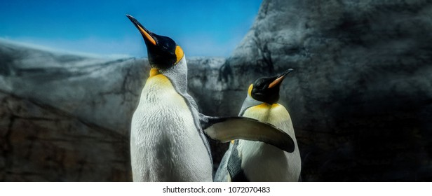 Group of king penguins on South Georgia Island Antarctica, sky and ice mountain background