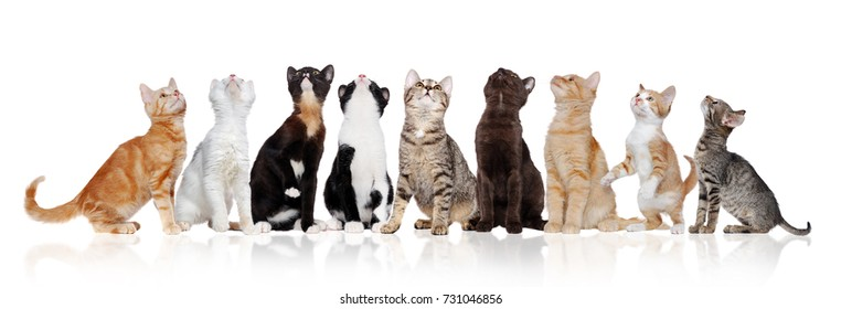 Group of kittens of different breeds looking up isolated over white background