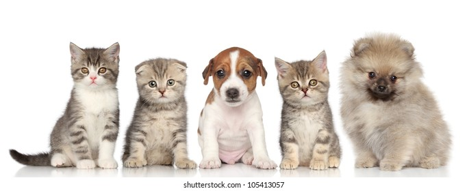 Group of kittens and puppies posing on a white background