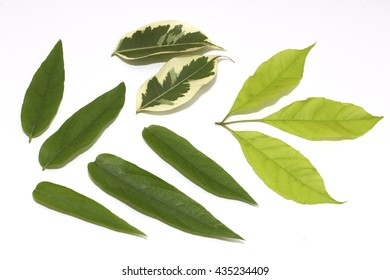 group of leaf on white paper
