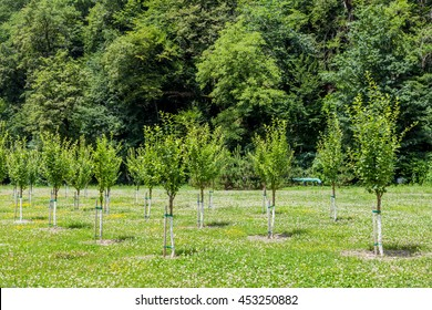 Group of little trees growing in garden