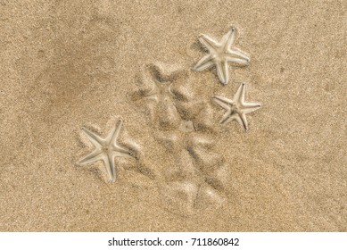 Group of Live starfishs on beach sand, top vew