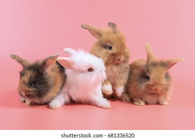 Group of lovely  bunny easter brown and white rabbits on pink background.