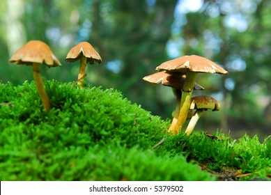 group of magic mushrooms on moss in scenic forest background