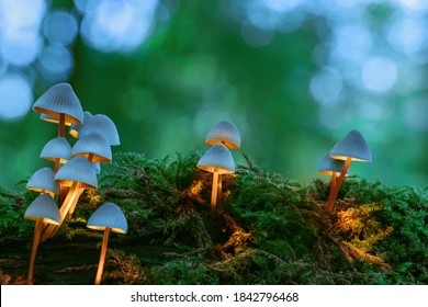 Group of magical glowing white mushrooms on green moss with a blurred forest background. Warm white glowing mushrooms looking as bedroom lamps, fantasy background