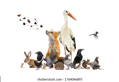 Group of many animals from european fauna park and garden, red fox, stork - Shutterstock ID 1764046895
