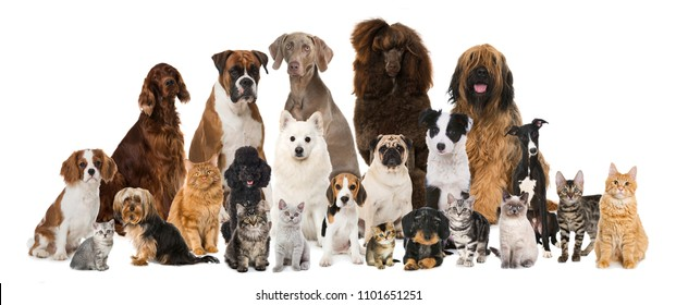 Group of many cats and dogs isolated on white background