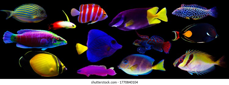 Group of marine animals isolated on black background (Fishes, Corals, Invertebrates) - Shutterstock ID 1770840104
