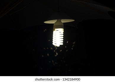 A group of mayfly and moth flying around the nightlight