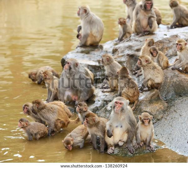 group of monkey