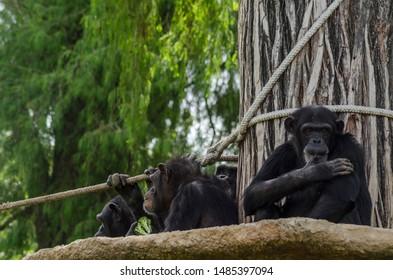 group of monkeys on a tree
