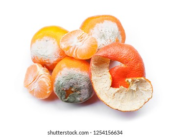 Group of mouldy rotten mandarins isolated on white background
