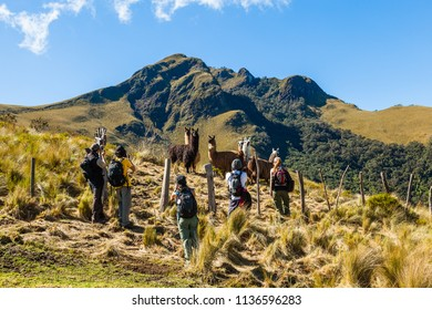 A group of mountaineers stop to photograph a group of llamas in their mountain pen
