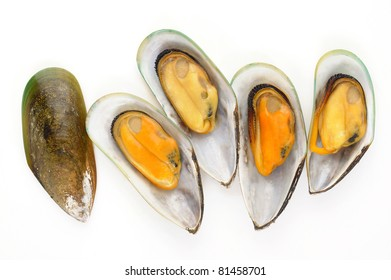 group of mussels