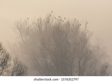 group of natural black ravens sitting on treetop on misty morning