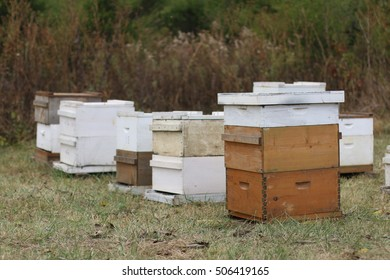 Group Of Natural Wood And White Painted Beehives With Supers Containing Thousands Of Honey Bees In Pasture Field On A Farm In the Mountains Of South West Virginia