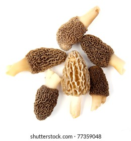 Group of one yellow and five gray morel mushrooms (Morchella esculenta) collected in a back yard in Indiana, USA, isolated against a white background