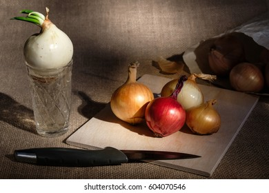 group of onions different colored located on wooden board on burlap textured surface spot lighted and near board glass cup with water where growing one onion with green stem and knife on foreground
