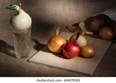 group of onions different colored located on wooden board on burlap textured surface spot lighted and near board glass cup with water where growing one onion with green stem/different object position