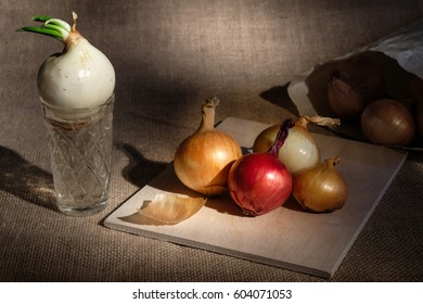 group of onions different colored located on wooden board on burlap textured surface spot lighted and near board glass cup with water where growing onion with green stem and paper bag on background