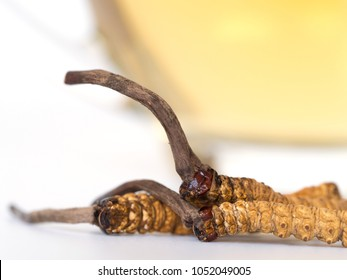 Group of Ophiocordyceps sinensis or mushroom cordyceps this is a herbs placed in front of a glass of cordyceps water. on isolated background. Medicinal properties in the treatment of diseases.
