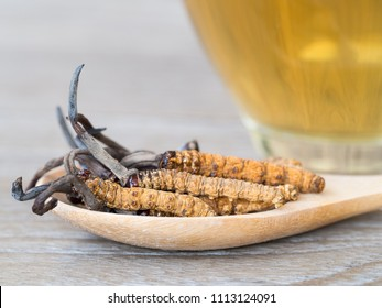 Group of Ophiocordyceps sinensis or mushroom cordyceps this is a herbs placed on wooden spoon in front of a glass of cordyceps water. on isolated background. National organic medicine.